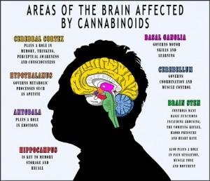 marijuana abuse